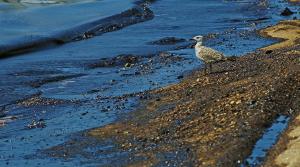 Προστασία Θαλάσσιου Περιβάλλοντος